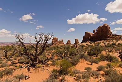 Desert Landscape Desert Landscape