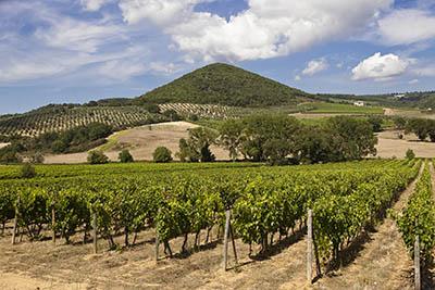 כרם - דרך היין   כומים תמונות של שדות צילומים