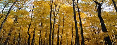 עצים צהוביםעצים צהובים