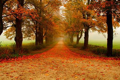 דרך כפרית בין עציםדרך כפרית בין עצים  Trees-rows-accros-along-coutry-road