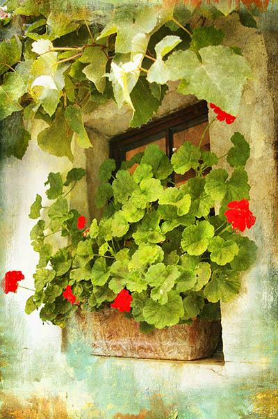 חלון עם פרחיםחלון עם פרחים