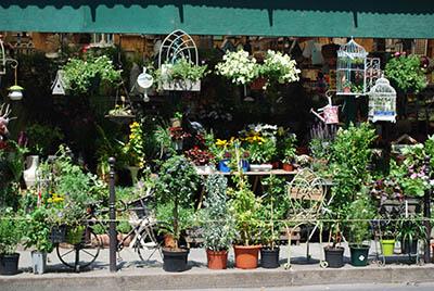 חנות פרחים ועציצים