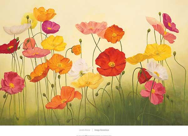 פרגים באור השמשפרחים, פרגים, צבעוני , שדה, אביב, אביבי, נעים, שטוף שמש, אדום, צהוב, ורוד, סגול