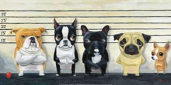 מסדר זיהויכלבים, חמוד, מסדר זיהוי, שורה, משטרה, פושעים, מצחיק, הומור,
