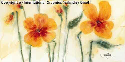 פרחים בכתוםשדה פסטורלי פריחה יופי צבעוני חם