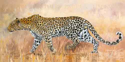 נמר במרדףאפריקה ג'ונגל נמר חברבורות שדה