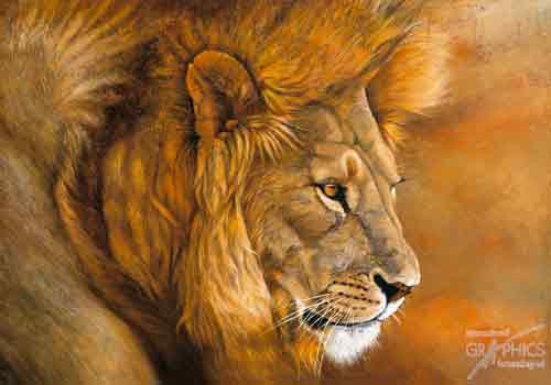 אריה בסרנגטירעמה אריה אפריקה מדבר מבט טורף מלך החיות