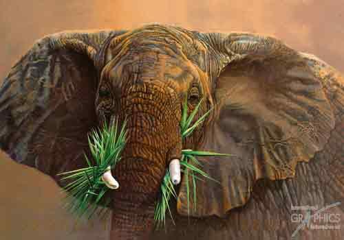 פיל אוכל ירקפיל אפריקה ירק חיות