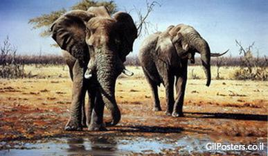 פילים 2  - תמונת שמן על בדפילים 2  - תמונת שמן על בד