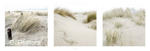 דיונותדיונה חול מדבר חוף צהוב