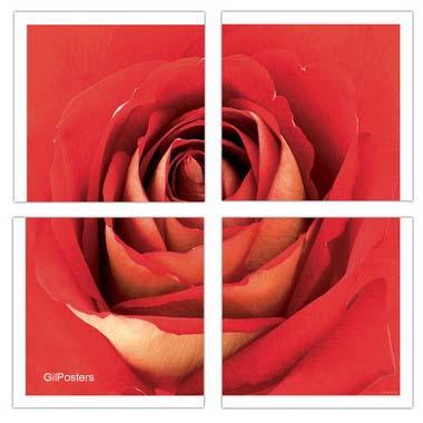 שושנהפרח אדום שושנים רומנטיקה