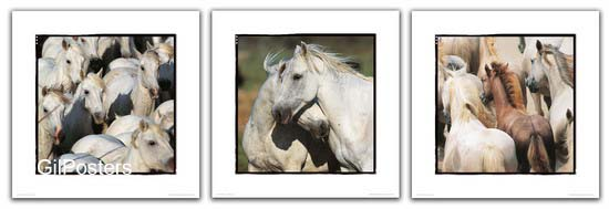 עדר סוסים לבניםסוס יפה גזעי טבע פרא פראי מרוץ רכיבה