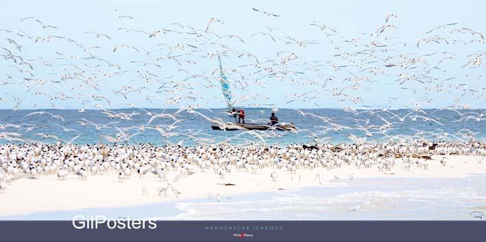 שחפיםציפור ציפורים מים ים שחף שמים