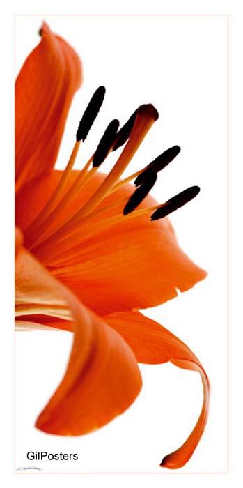 הפרח האדוםאירוטי פרחים טבע אדום ירוק
