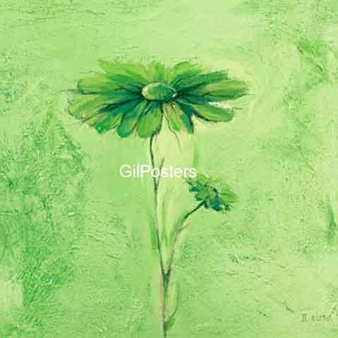 חרצית ירוקה