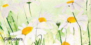 חרציותפרח לבן שדה נוף פסטורלי טבע