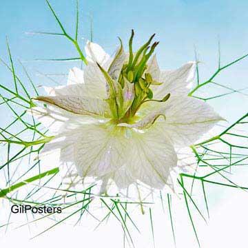 פריחה בלבןפרח פריחה לבנה טבע פסטורלי נוף חם סקסי טבע