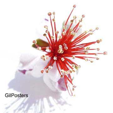 פריחה וולקניתפרח פריחה פסטורלי נוף חם סקסי טבע