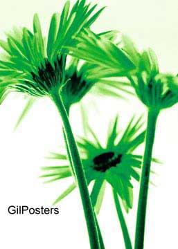 זר חרציות ירוקותפרח פרחים רכות עדינות עיצוב פסטורלי