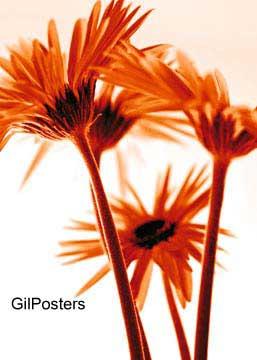 זר חרציות כתומותפרח פרחים רכות עדינות עיצוב פסטורלי