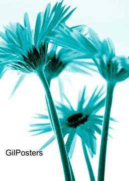 זר חרציות בטורקיזפרח פרחים רכות עדינות עיצוב פסטורלי