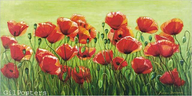 שדה פרגיםפריחה אדום ירוק מדהים כלנית