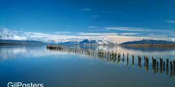 ציפורי קורמורן על יתדותציפור ים טבע נוף
