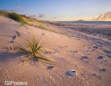 מפרץ קריקרי הצפוניטבע חול גבעה הר חוף פסטורלי כתום  נוף חום