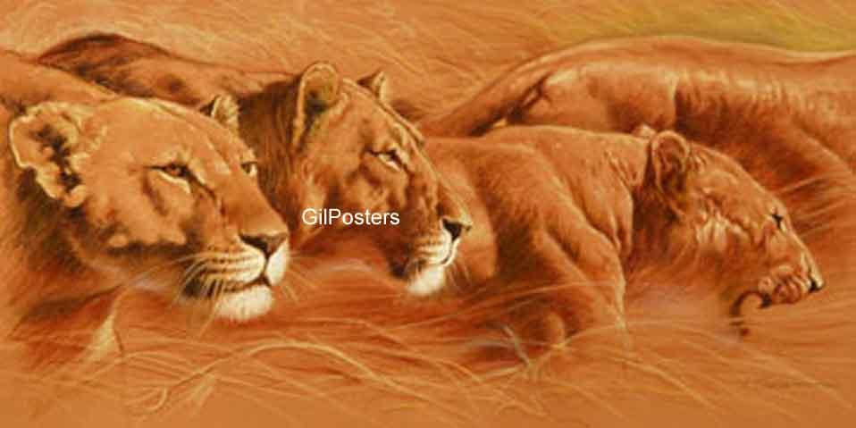 לביאות  אריותאריה  אריות