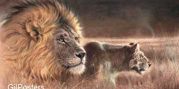 אריות משחרים לטרףכח עוצמה ראש מדבר סוואנה לביא שלווה