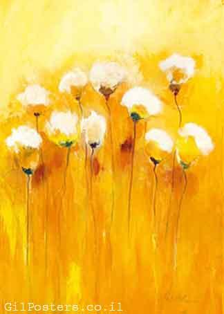 שדות קיץ 3חרציות לבן צהוב חי חם כתום זוג