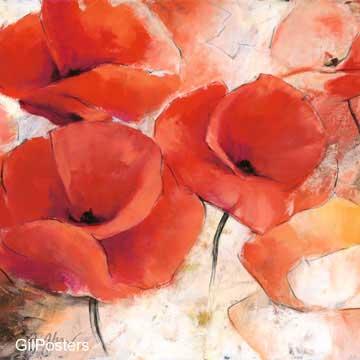 פרחים באדוםכתום דקורציה יופי צילום טבע כלניות