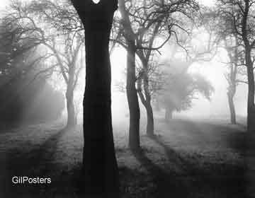 עציםאור שחור לבן עץ שלכת נוף
