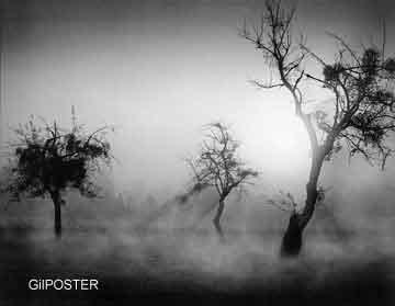 עצים 2אור שחור לבן עץ שלכת נוף בודד בדידות ערפל חשוך