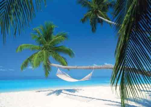 האיים המולדבייםים חוף לבן דקלים חופים רוגע חופש סוטול כייף מנוחה Maldives Island Hammock תאילנד הונלולו Fihalhohi Island  Divi Divi Tree Tom Makie