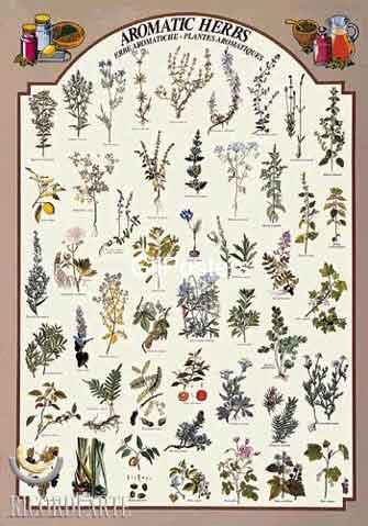 צמחים ארומטים