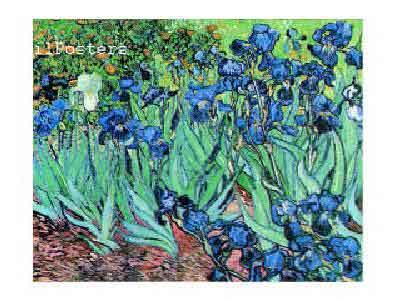 ואן גוך פרחים כחולים וון גוך
