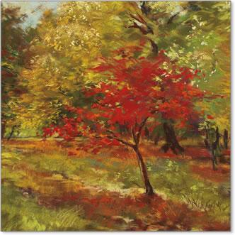 שביל סתוויעצים , נוף, כתום, צהוב, סתיו, אווירה, שלכת, יער, חורשה,