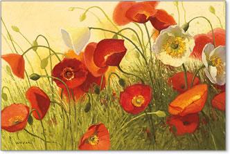 גל חוםפרחים, שדה, כלניות, אביב, פריחה, אחו, פרגים