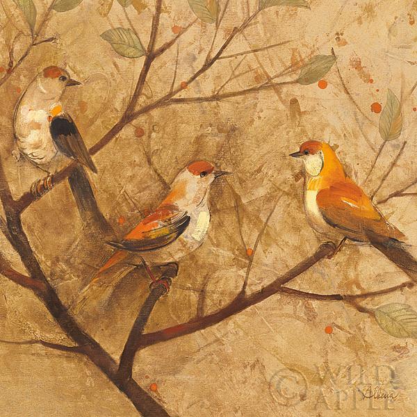 ציפורים מתעדכנותחום, בז', ציפורים, שלוש ציפורים, עץ, ענפים