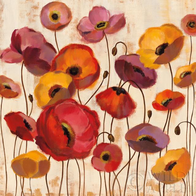 כלניות בזריחהכלניות, כלנית, פריחה, שדה, פרחים, פרח, זהב, כתום, פרגים, סגול, אדום, זריחה