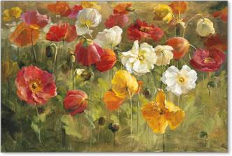 שדות פרגיםפרחים,שדה אחו, כלניות, פרג, פרגים, צבעוני, אביב