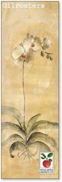 פרח עם שורשיםרומנטי עיצוב מודרני מינמליסטי טבע גבעול נקי צח אסטטי