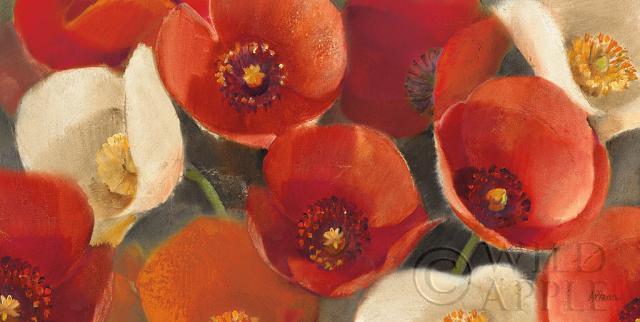 פריחת הפרגיםפריחה, פרחים, בוטני, קרם, דקורטיבי, פרחים, פרחוני, פרח, זהב, כתום, פרגים, פרג, אדום, אביב, צהוב, שדה