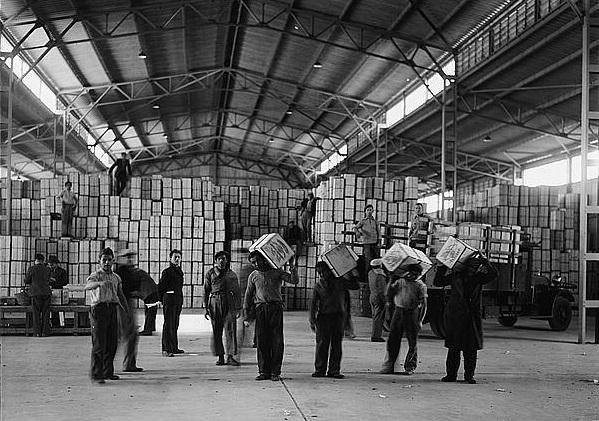 אריזת תפוזים - נמל תל אביב  - תמונה על קנבס,מוכנה לתליה.אריזת תפוזים - נמל תל אביב